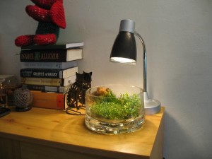 Creating modern sphere with aquarium plants