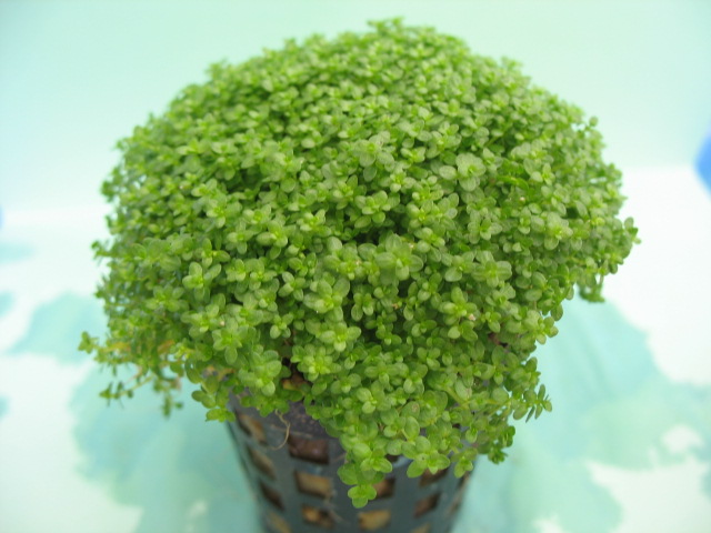 There are also Foreground plants in set. This group of plants adds a ...