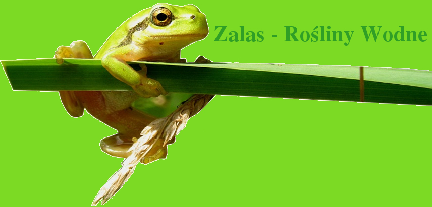 Zalas - Aquatic Plants and Aquarium Fish